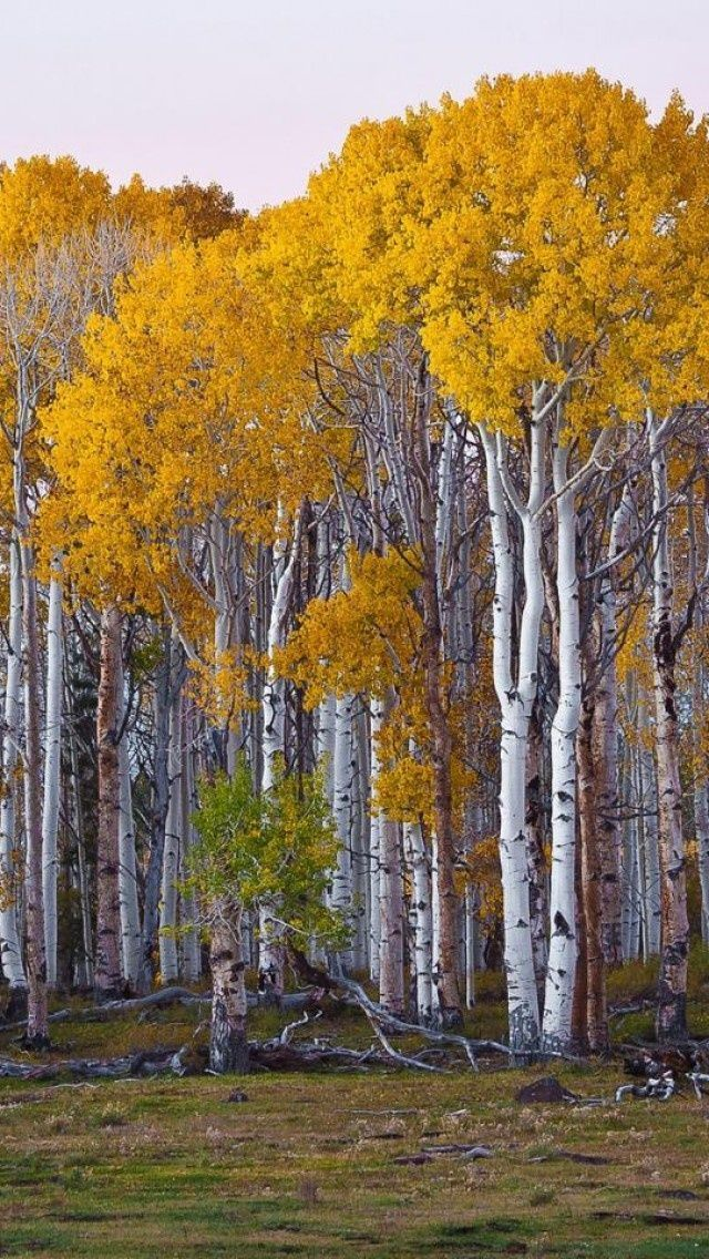 Yellow, Trees, Forest, Landscape, Nature