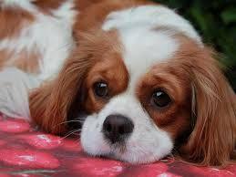 Risultati immagini per cani dolci