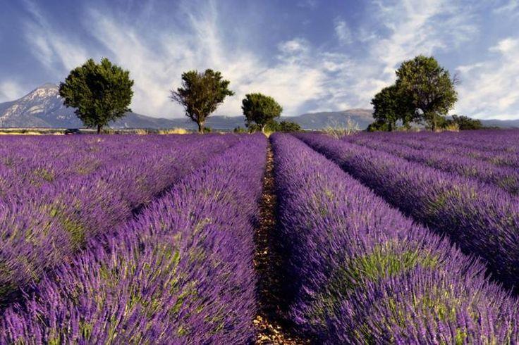 Als Öl hat Lavendel eine kräftigende Wirkung auf Körper und Geist und sorgt für erholsamen Schlaf - perfekt für die typische Waage.