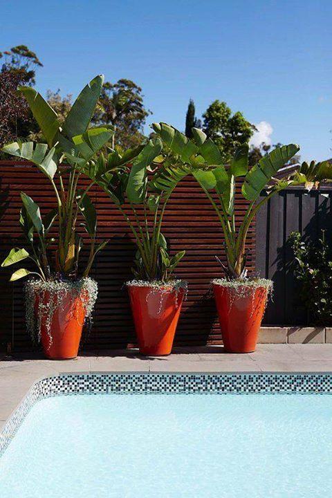 Blumentopfe Flower Pots In 2019 Plants Around Pool