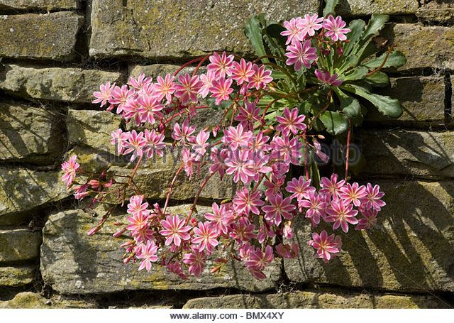 Image result for crevice garden