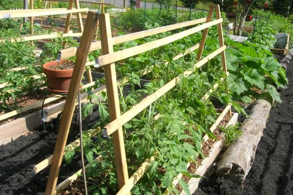 Tips for Beginner Food Gardeners - Page 4