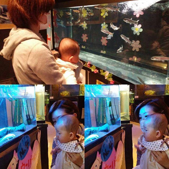 【yuinasan0910】さんのInstagramをピンしています。 《🐡🐠海沿いのマリエントへ🌊🐙 八食センターではたくさんのお魚見れるけれど・・・生きてないので、今日は生きてるお魚さんを見せに来ました😉結構興味津々で、お魚を目で追ったり、手を伸ばして触ろうとしたりするところが見れて、楽しかったです💕 結愛の横顔が、完全にクレヨンしんちゃん(笑)  #結愛 #ゆいな #愛娘 #生後5ヶ月 #9月10日生まれ #9月生まれ #親バカ #親バカ部 #ママリ #女の子ママ #長女 #子育て #成長日記 #新米ママ #baby #5months #girl #babygirl #aquarium #アクアリウム #小さな #水族館 #生きてるお魚さん #クレヨンしんちゃん》