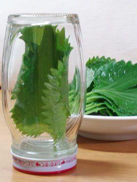 もう無駄にしない!薬味野菜の保存方法【ねぎ・生姜・にんにく・大葉・茗荷】 - NAVER まとめ