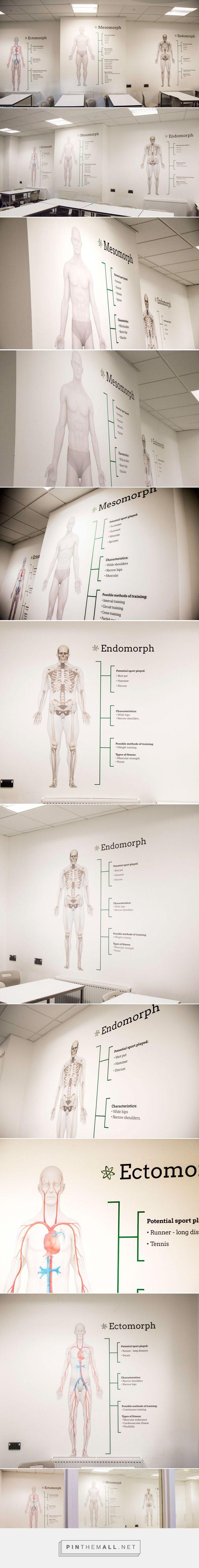 Somatotypes (PE Classroom design) on Behance - By Andrew Heffernan