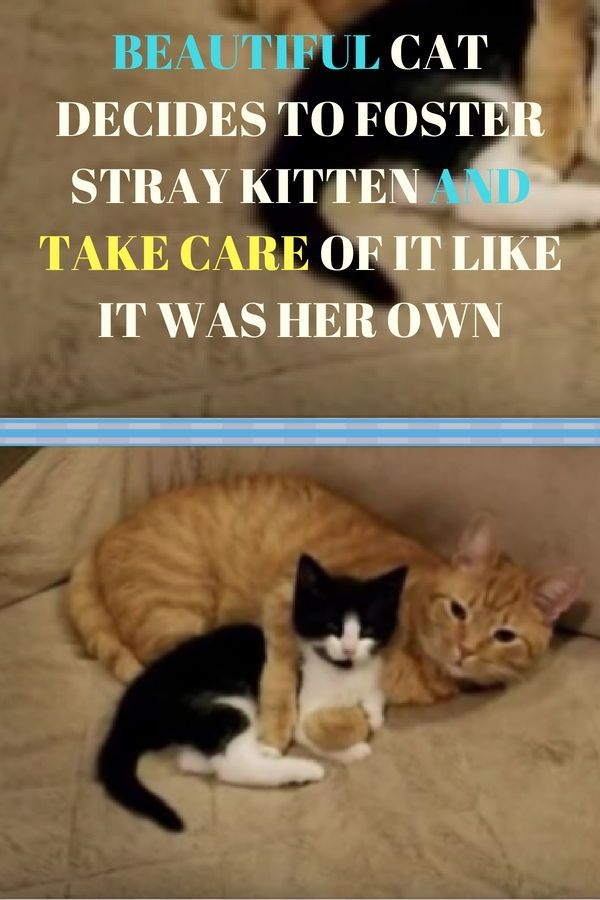 Beautiful Cat Decides To Foster Stray Kitten And Take Care Of It