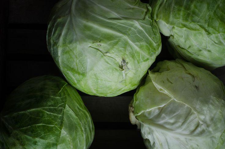Cabbage Ready for Homemade Sauerkraut Recipe
