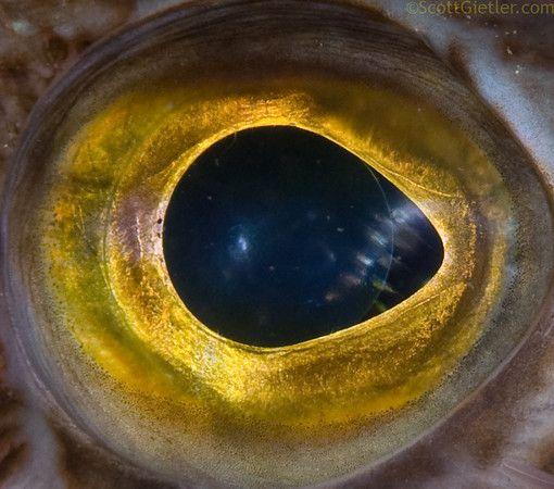 194 best images about eyes eyes on pinterest eyes