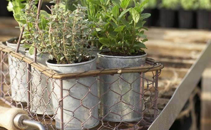 for a thriving container garden garden container ideas