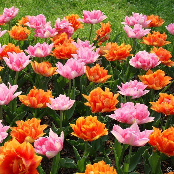 die besten 25 tulpen kaufen ideen auf pinterest foam card schiffsbretter und schaumkern. Black Bedroom Furniture Sets. Home Design Ideas