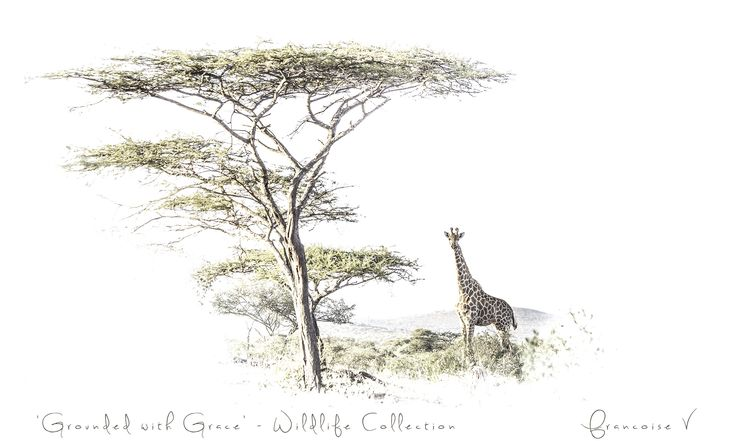 """""""Grounded with Grace"""" {Wildlife Collection} by Francoise V"""