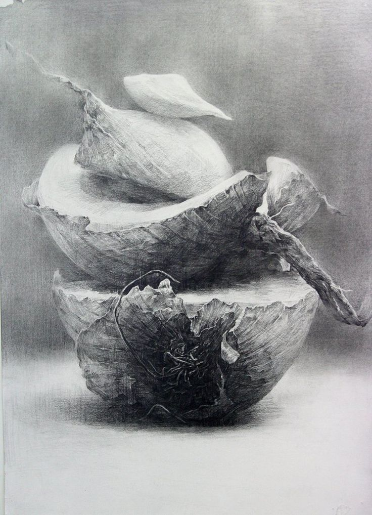 an onion by indiart3612 on deviantART