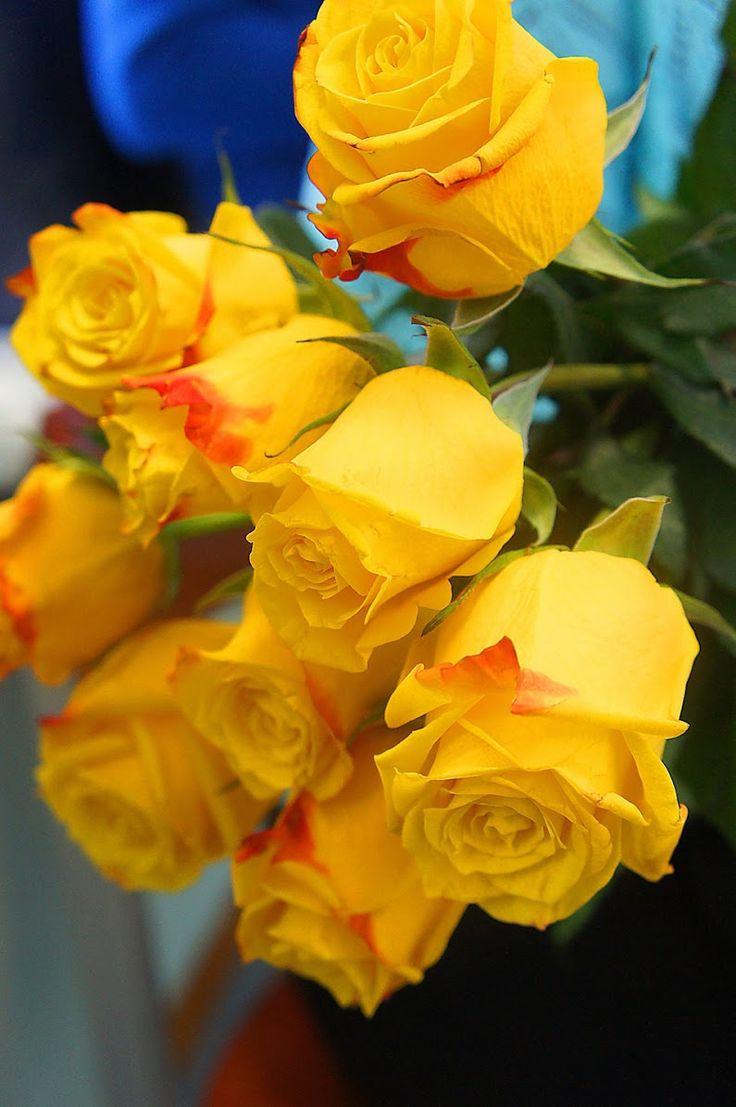 Фото сирийской сиреневые розы цветущей меняется