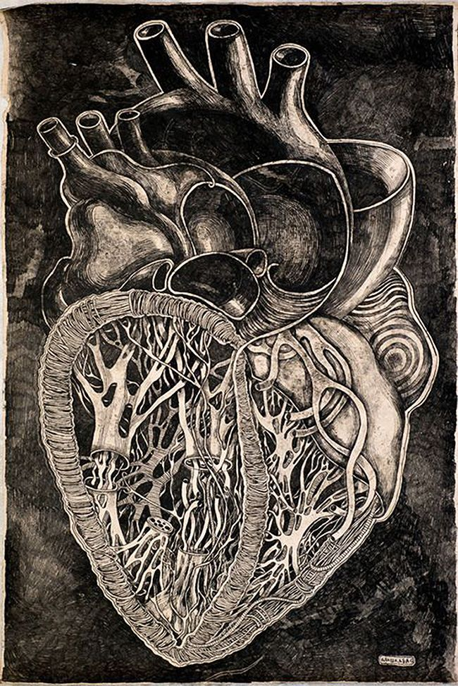 Olesya Drashkaba, anatomical heart drawing.
