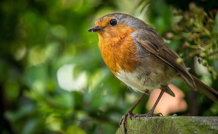 My Robin friend.