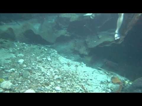 Detik  detik Kelahiran Siluman Buaya Buntung - YouTube