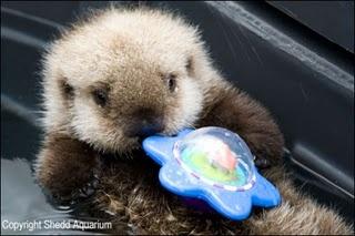 287 best Sea Otters im...