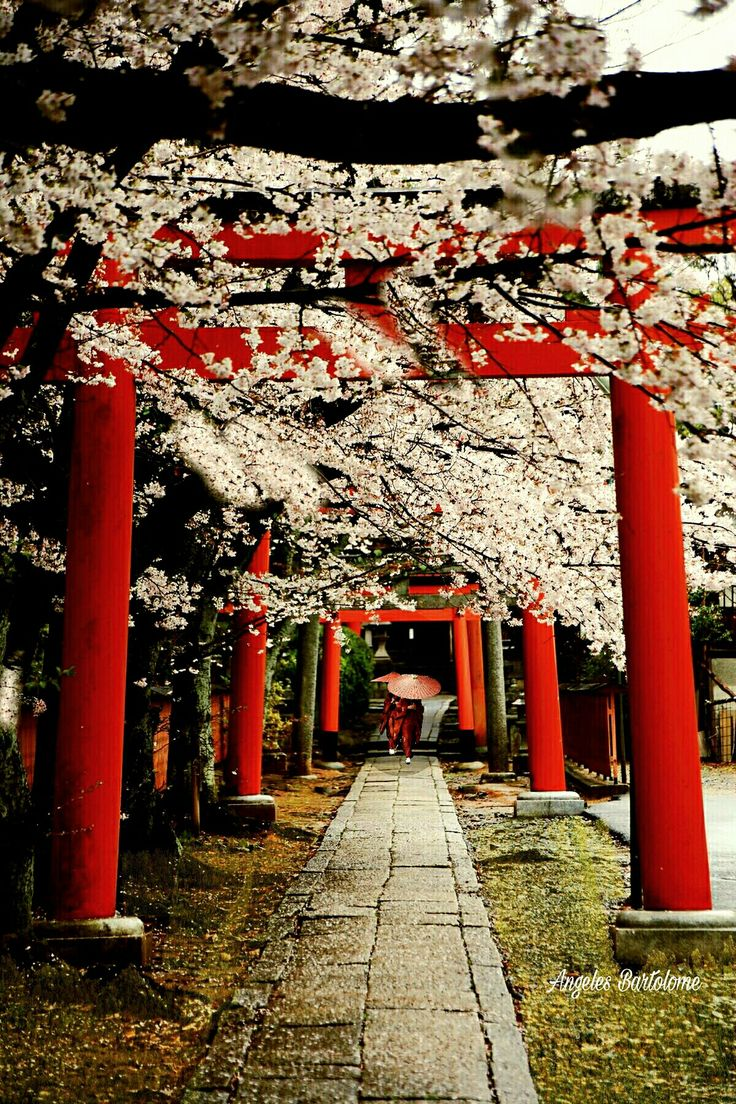 Kyoto Japón Sakura partez en voyage maintenant www.airbnb.fr/c/jeremyj1489 http://www.jetradar.com/?marker=126022