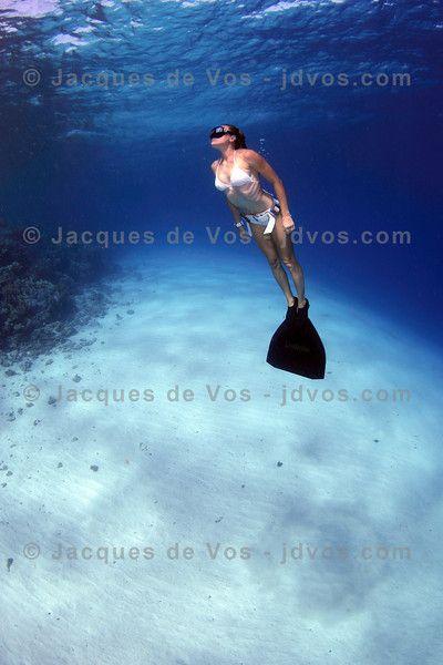 Laká vás podvodní fotografie na #fotoexpedice? Nechte se inspirovat třeba tady. #focenípodvodou #podvodnífotografie http://jacquesdevos.smugmug.com/Underwater/FreedivingPhotography/Freediving-Stock-Images/