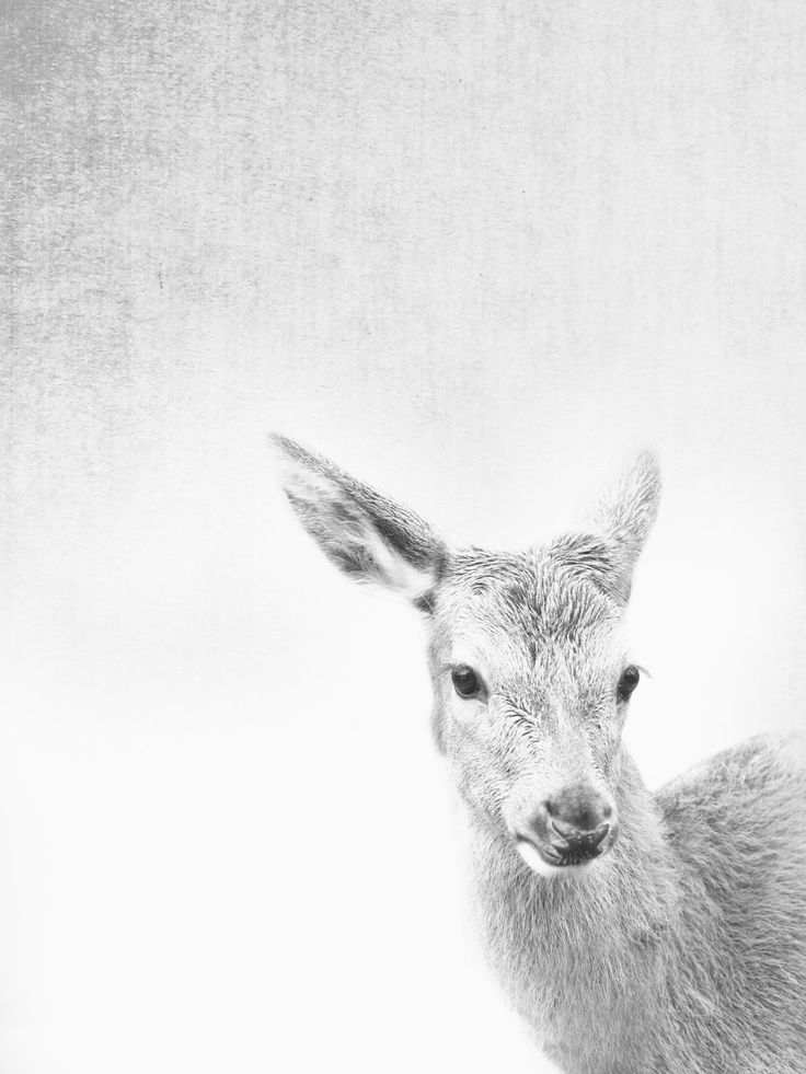 #deerprint #fawnprint  #fawn #interiordesign #interiors #home  #art #fineart #prints   This is a fine art photograph printed on superior quality 220 gsm paper. A high quality,  Fine Art Paper offers a professional, conservation-quality natural white art print with a lightly textured ...