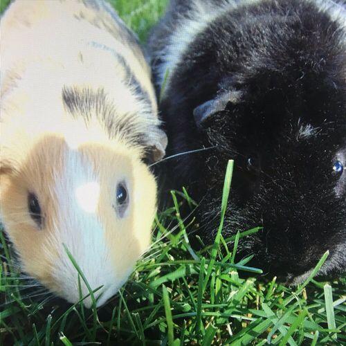 """Bitte stimmen Sie ab, damit mein Tier Simon & Winston """"The Cutest Pet of Fall"""" auf P …"""