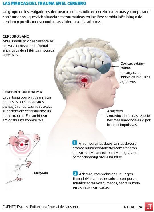 Investigadores comprueban vínculo neurológico directo entre traumas en la niñez y agresividad en la adultez. Una investigación de la Escuela Politécnica Federal de Lausanne, demostró que el trauma en la infancia provoca cambios a nivel cerebral.