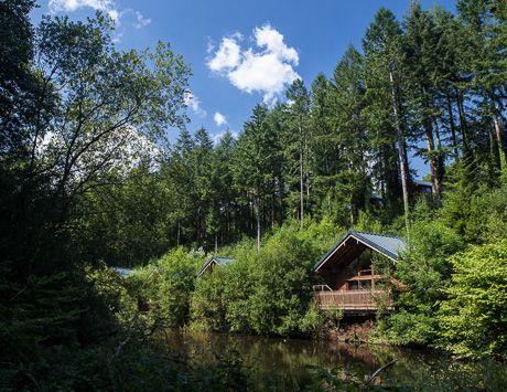 Cabin on the millpond at Deerpark #Cornwall #ForestRetreat #UKgetaway #summer   Deerpark Log Cabins & Lodge Holidays 2015/2016 - Forest Holidays