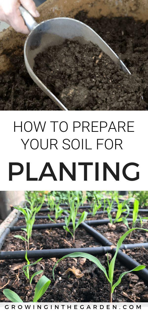 How To Prepare Your Soil For Planting Soil Healthysoil Fallplanting Springplantingyour Garden Soi Garden Soil Preparation Organic Gardening Tips Garden Soil