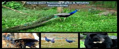 Uttarakhand posts: Nanda Devi National Park