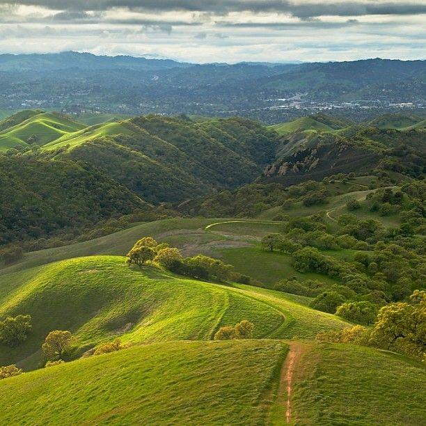 Wow!  Rain does Danville, California good!  Luscious green hills!!