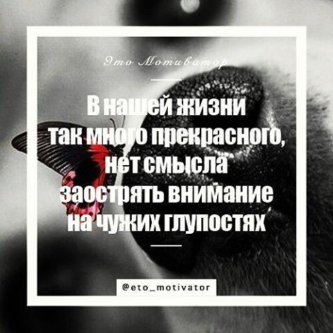 📌 В нашей жизни так много 🐝прекрасного, нет смысла заострять внимание на чужих глупостях. #цитаты #цитата #этомотиватор #мотивация #мотиватор #quotes #guote #quoted #quoteoftheday #цитатадня #цитатадня📌