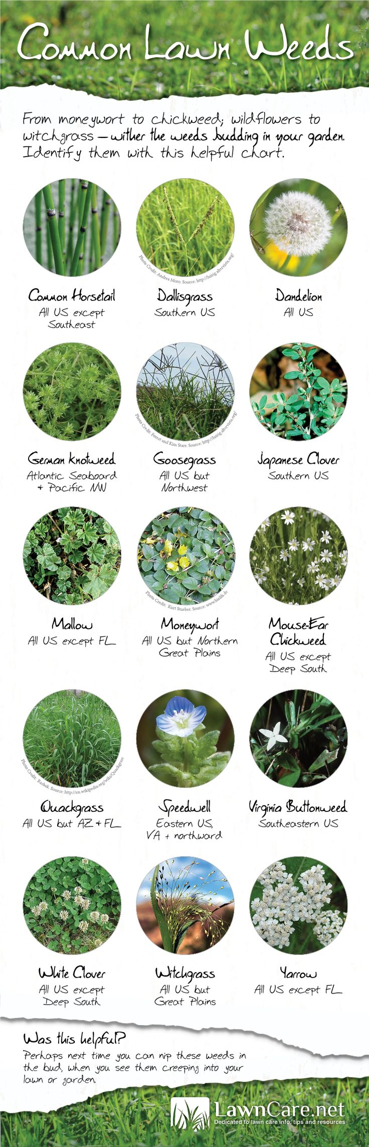 Find out what types of weeds are plaguing your lawn with this handy weed identification guide from LawnCare.net!