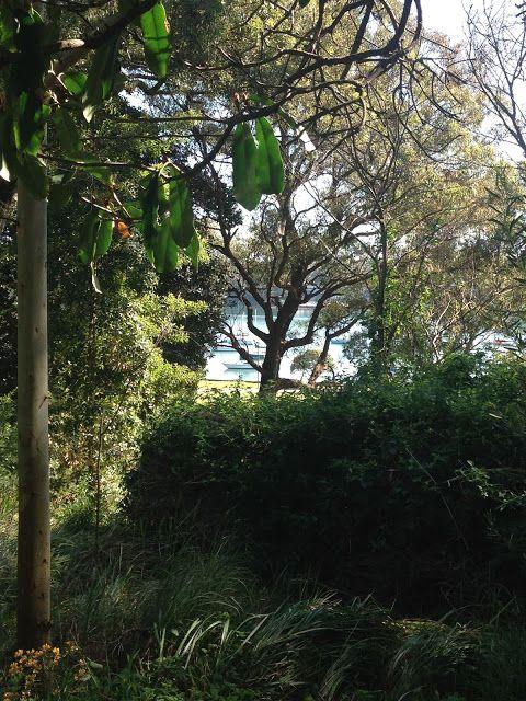 The Crooked Cottage: Hidden delights of Rozelle - Callan Park Bush Trac...