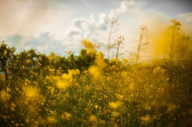 splitshire spring time