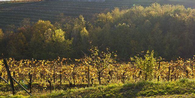 Cdm ok sistema autorizzazione impianti viticoli Cdm ok sistema autorizzazione impianti viticoli Al via da gennaio 2016 e in vigore fino a 31 dicembre 2030