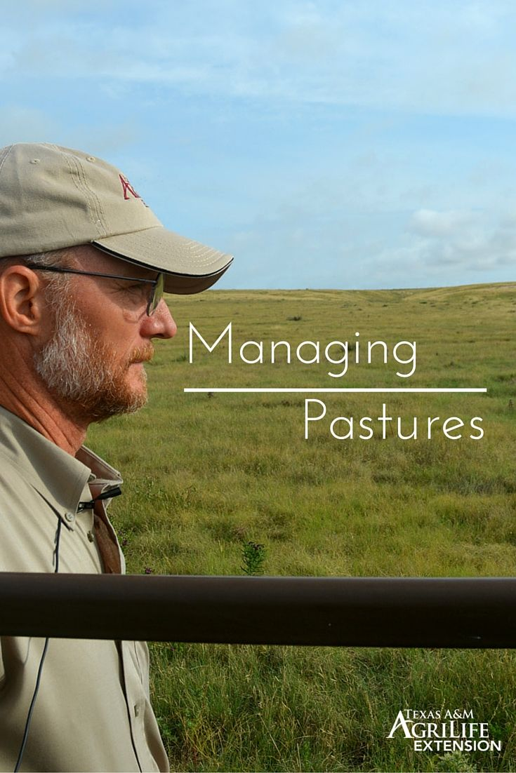 There is more to maintaining a pasture than simply growing grass.