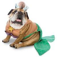 zelda-mermaid-halloween-dog-costume-1.jpg