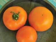 A bounty of options exists for home gardeners when they choose the incredible variety of heirloom tomato seeds for their gardens