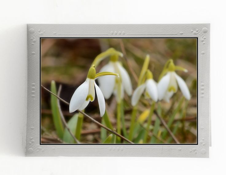 Fine Art Blank Note Cards; First Signs of Spring; Set of 3 Greeting Cards; Flowers in Nature; Mounted Art Photos; Custom Orders Available by MissmacMemories on Etsy