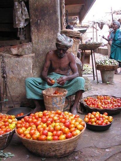 Baskets of ripe tomatoes in a street vegetable market in Tamil Nadu - Madurai, Rameswaram, Tanjur, India