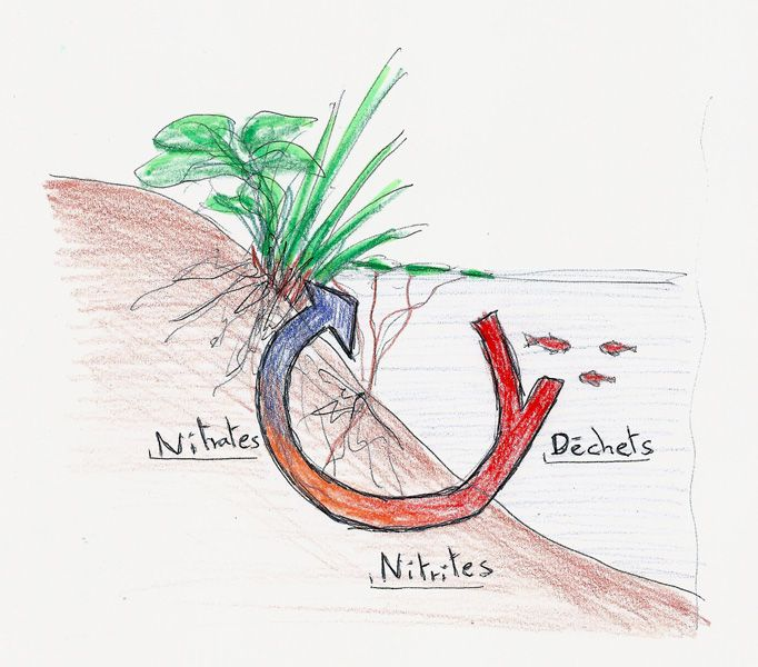 Cycle de l'azote simplifié