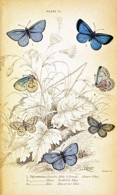 Мобильный LiveInternet Арт - картинки для творчества ~ бабочки и мотыльки 29шт | MerlettKA - © MerlettKA® ™ |