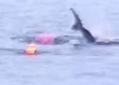 El ataque de un tiburón blanco al pasajero de un kayak (VÍDEO)