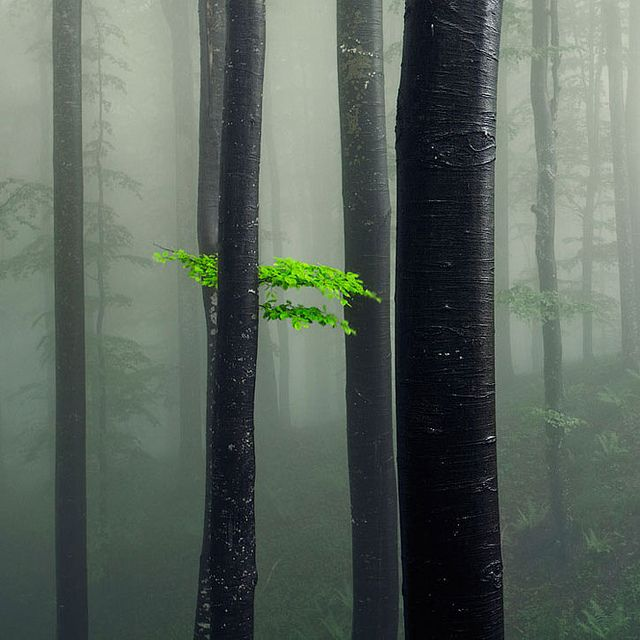A Bit of Green by Evgeni Dinev, via Flickr                                                                                                            A Bit of Green             by        Evgeni Dinev      on        Flickr