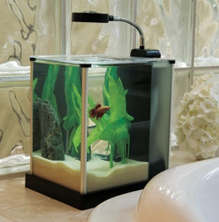 12 best images about office fish tank on pinterest home minis and families - Petit aquarium design ...