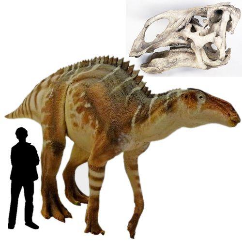 brachylophosaurus - photo #16