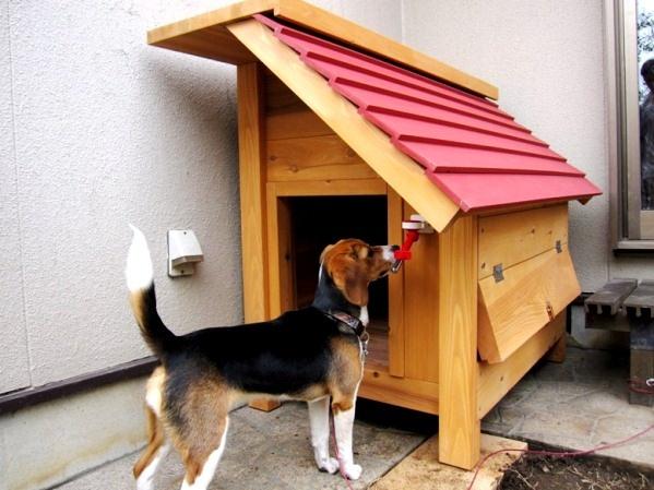Fritz Dog Kennel Houston