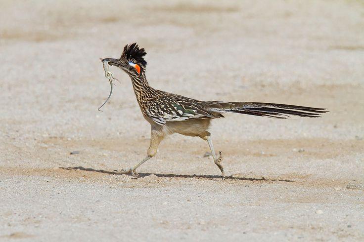 62 mejores ideas en Birds en Pinterest | Pájaros bonitos, Animales y ...