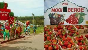 mooiberge farm stall - Google Search