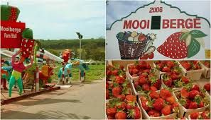 mooiberge farm stall - Google Search